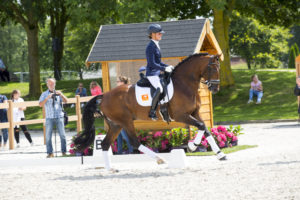 D12 National Dressage Competition for 4 years